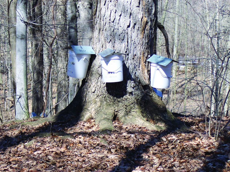 Blandford Nature Center Maple Syrup