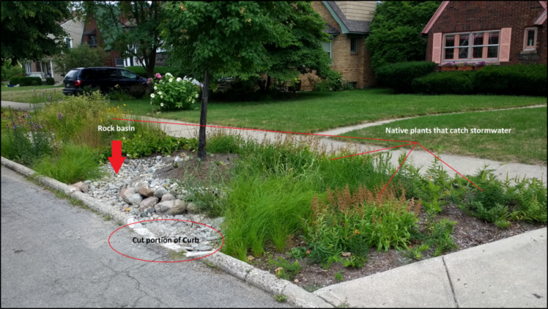Rain Gardens Continue To Flourish Transform Plaster Creek