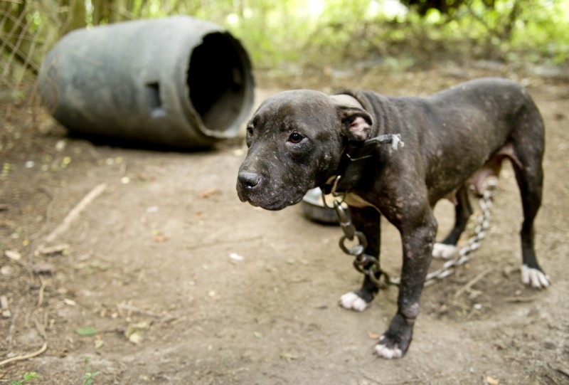articles around doggy combating 2010