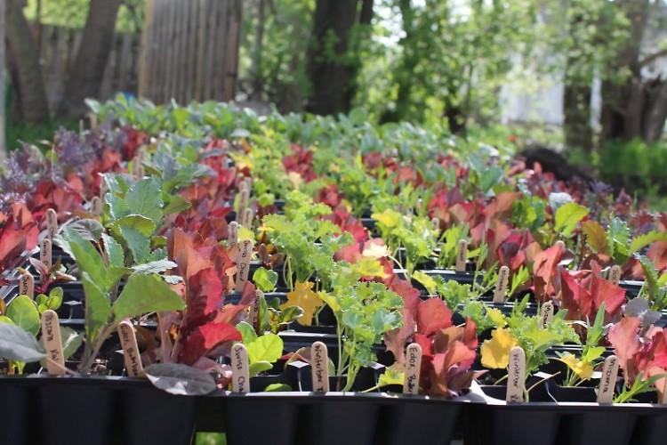Urban Roots' plants