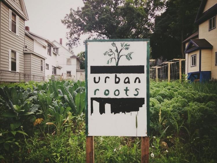 Urban Roots garden