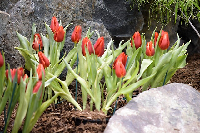 Spring is in the air at the Grand Rapids Home and Garden Show