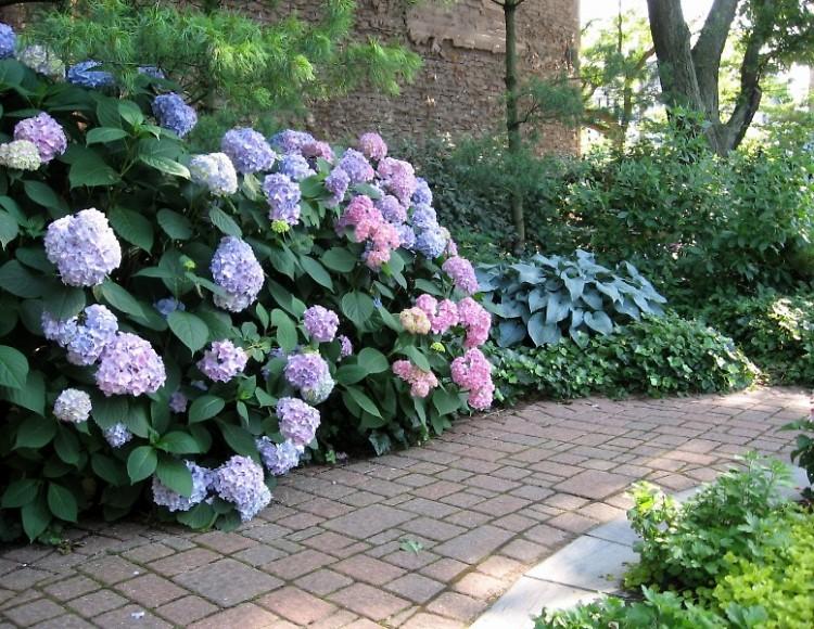 Summer garden in Grand Rapids.