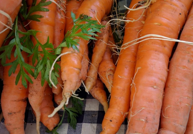 Michigan Carrots