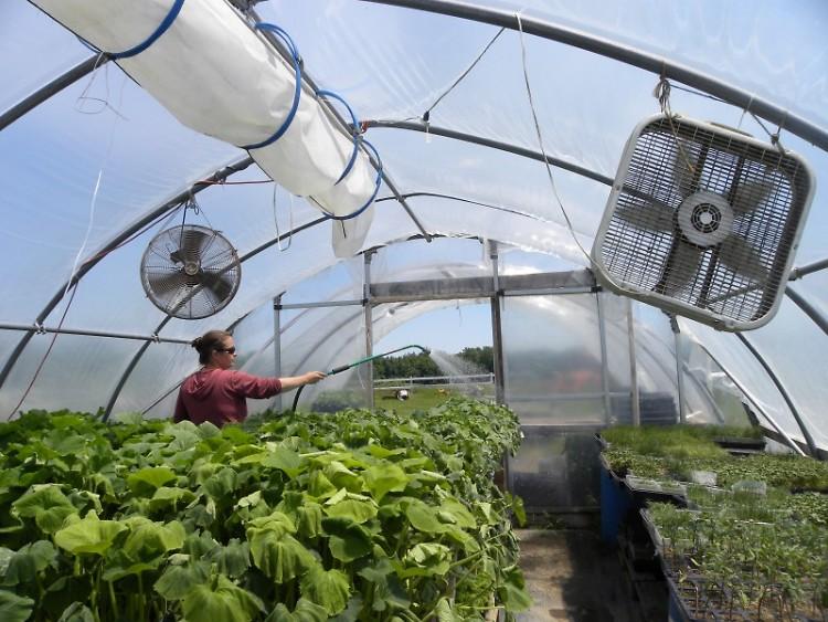 Rachelle Bostwick waters starts at Earthkeeper Farm