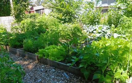 ECA community garden