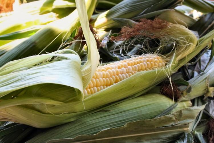 Michigan Sweet Corn