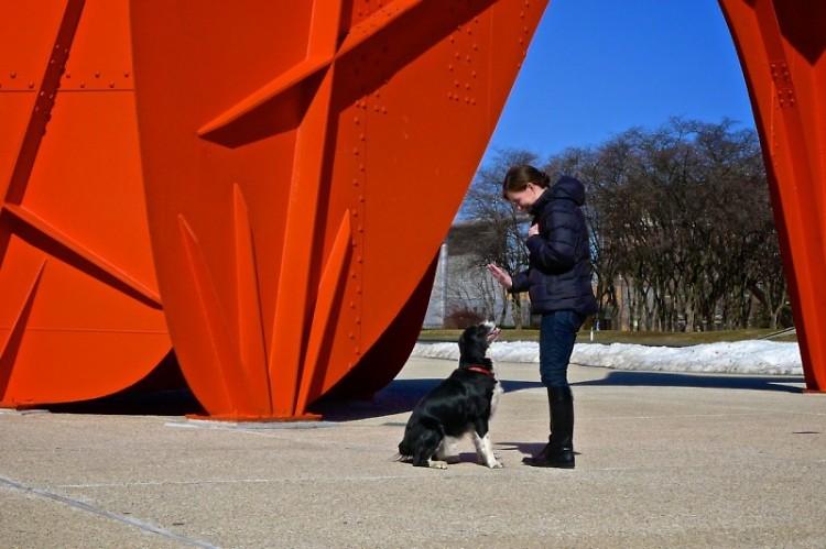 Gavin trains a dog in front of Alexander Calder's La Grande Vitesse statue,