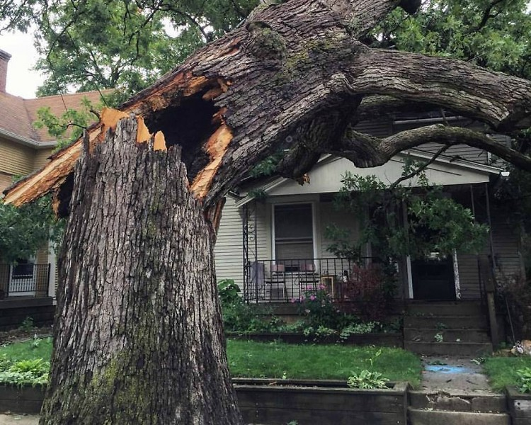 Hollow Tree in East Hills from the tornado and storms on August 20, 2016.