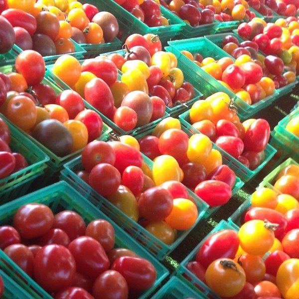 Collection of Michigan Cherry & Grape Tomatos