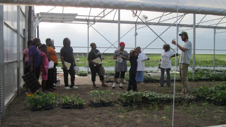 OKT Gardeners picking organic starter food plants at Blandford Farm Greenhouse