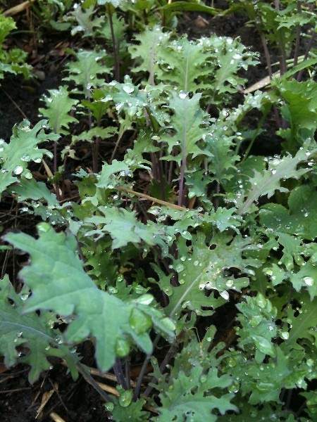 Kale. Embrace it. It's good for you and it's finally a food getting due recognition.