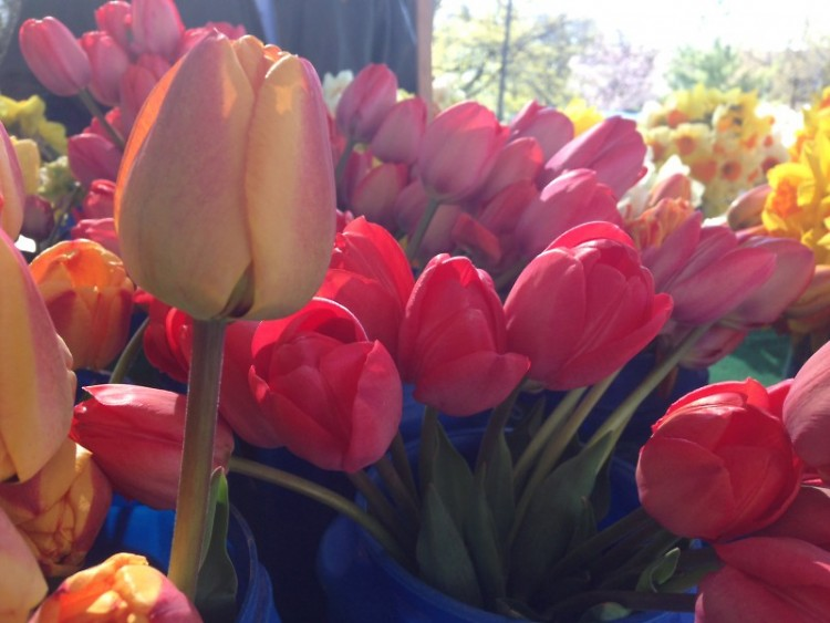 Tulips at the Market