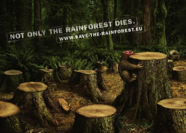 Not only the rainforest dies.