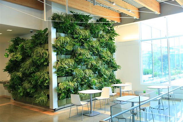 Downtown Market expands green space with indoor living wall | The Rapidian