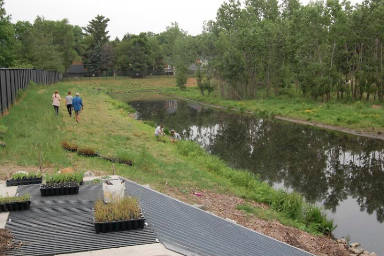 Volunteers planting plugs near the outlet at Kreiser Pond, summer 2014.