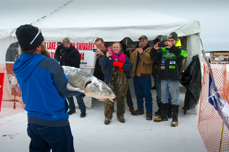 P.D. Lail, Jr. shows off his catch following the 2014 lake sturgeon season.