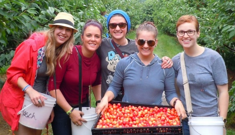 Terra GR staff members pick cherries for Feeding America West Michigan, July 17, 2015.