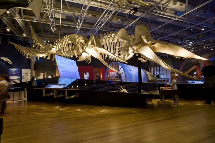 Whale exhibit at the Grand Rapids Public Museum