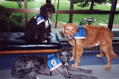 Clockwise from top; Maxine, Bailey Cook, and Indigo, three former volunteers at the west Michigan Therapy Dogs, inc.