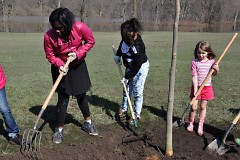 Community members worked together to plant trees.