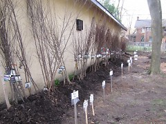 Trees for purchase at the 2011 Spring Tree and Shrub Sale.