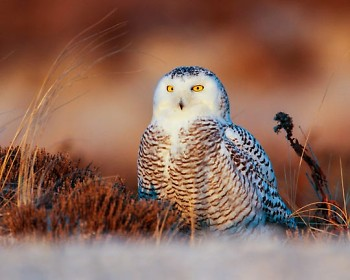 """Michiganders might recognize the area's incoming snowy owls from the """"Harry Potter"""" film series."""