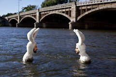 """""""Self-Portrait as Bunnies (The Bathers)"""" by Alex Podesta can be found in the Grand River"""