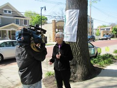 Dotti Clune talks with the media in front of the Mayor's Tree of the Year, 2012