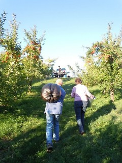 Volunteers haul apples up a hill. Surplus food is gleaned from local farms every year.