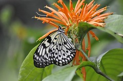 The Fred & Dorothy Fichter Butterflies Are Blooming at Meijer Gardens from March 1 - April 30
