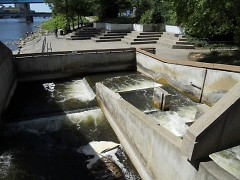 Because of the many dams on the Grand River, fish must rely on the fish ladder to swim upriver