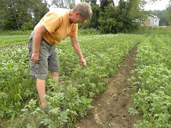Valerie Lane examines a row of potato plants at her farm in Cloverdale.