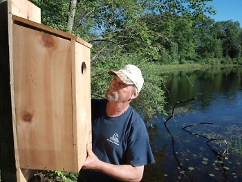 Michigan conservationists created artificial homes for ducks while wetland forests were growing back.