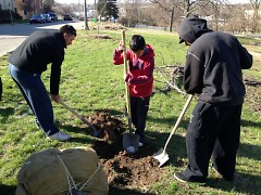 Tree planting day with Friends of Grand rapids Parks