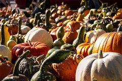 Gourds & Pumpkins at Fulton Street Farmers Market