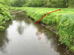 A stable, well-vegetated bank along a stream in a natural area near Holland, Michigan. Here, the stream is surrounded by floodpl