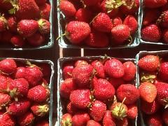 Fresh Picked Michigan Strawberries