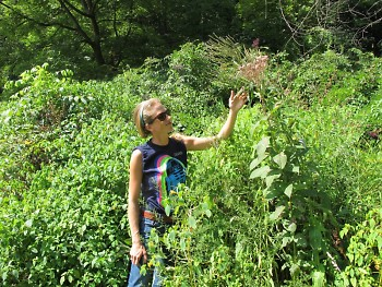 Starner's articles continue to introduce us to local foods, medicinal plants, and activities like foraging and canning.