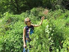 Starner admiring Blue Vervain & Joe Pye Weed, surrounded by Elderberries in a favorite urban wild garden