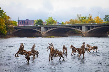 "The ""Stick-to-it-ive-ness"" horses playing in the Grand River"
