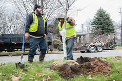 Twin Lakes Nursery planting new trees in the East Hills neighborhood