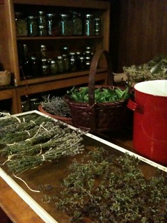 Herbal harvest ready to dry and store for winter use
