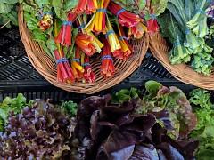 June Vegetables