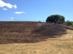 The hillside at Mary Waters Park after a fire on July 9.