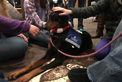 After passing therapy dog training, Meia is able to remain perfectly calm in stressful situations.