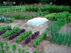 A past summer at Perkins Community Garden