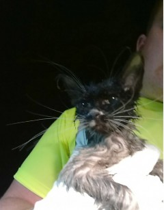 Puddles just minutes after being saved from the sewer at 4 am.