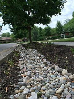 Part of the rain gardens