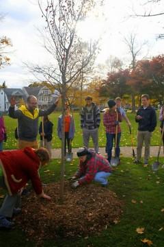 Tree planting on Westside